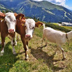 Unsere tierischen Almbewohner ©Latschenalm